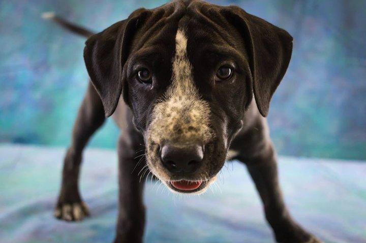(FOTOS) Humboldt Refugio de Animales del Condado de Perritos están Listos para ... - Costa Perdida de Avanzada 8