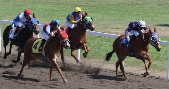 The Bettor's Guide to Friday's Horse Racing