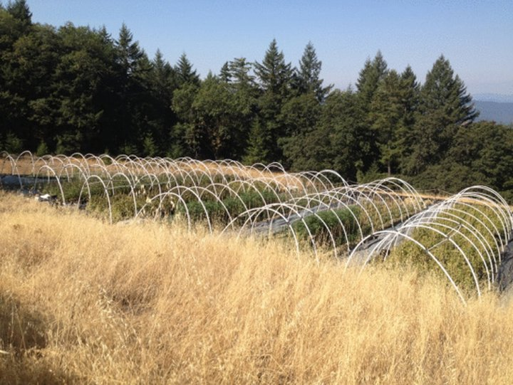 weed farmer overgrown apk free