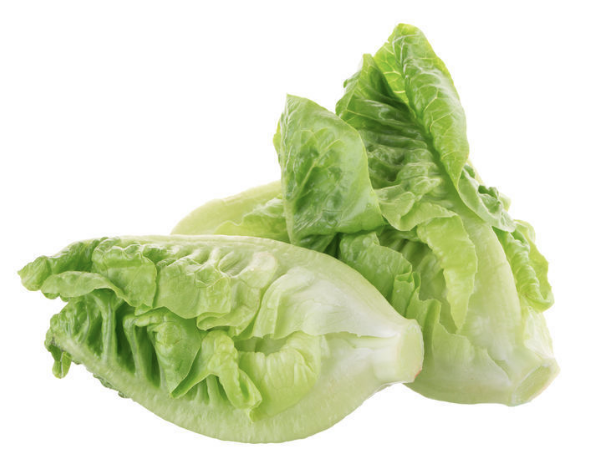 Throw away all your romaine lettuce, no matter where it's from — CDC