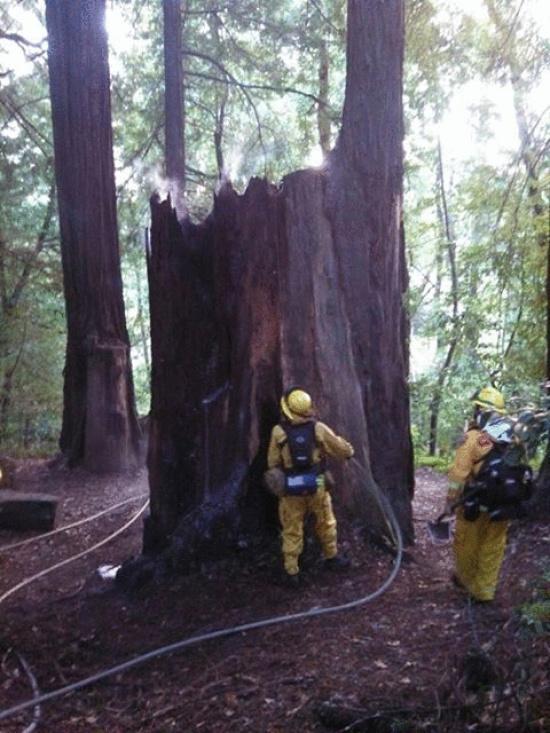 Fire in Tooby Park | Lost Coast Outpost | Humboldt County