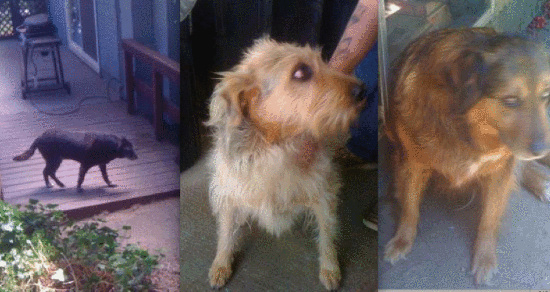 Suspect Identified in North Spit Animal Abandonment Case ...