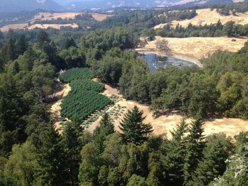 10 276 Marijuana Plants Eradicated By Sheriff S Department