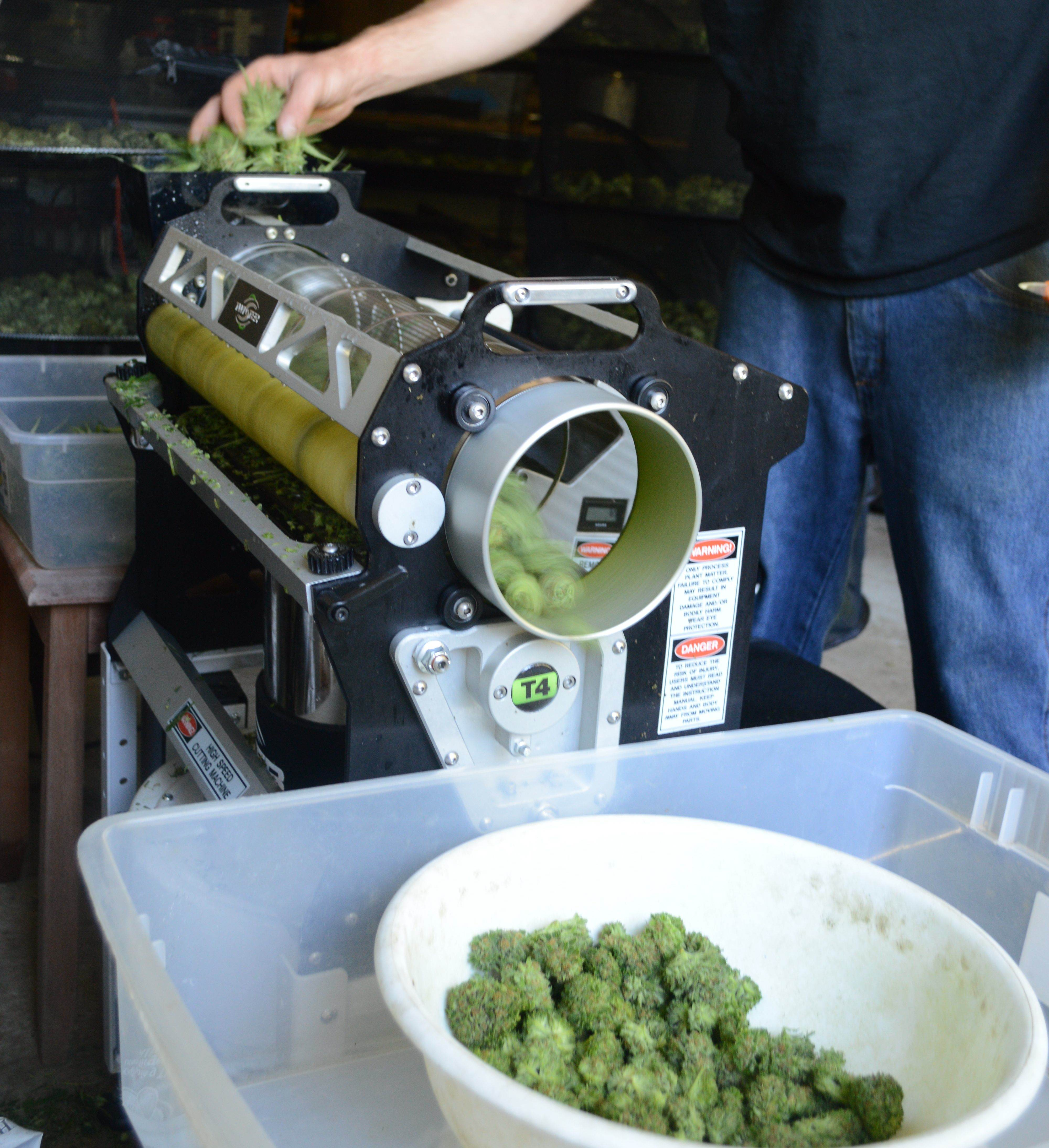 bud trimming machine for sale