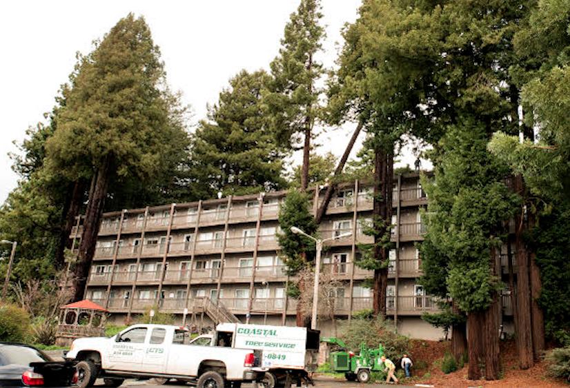 Update Big Ol Tree Falls On Campus Apartments Students