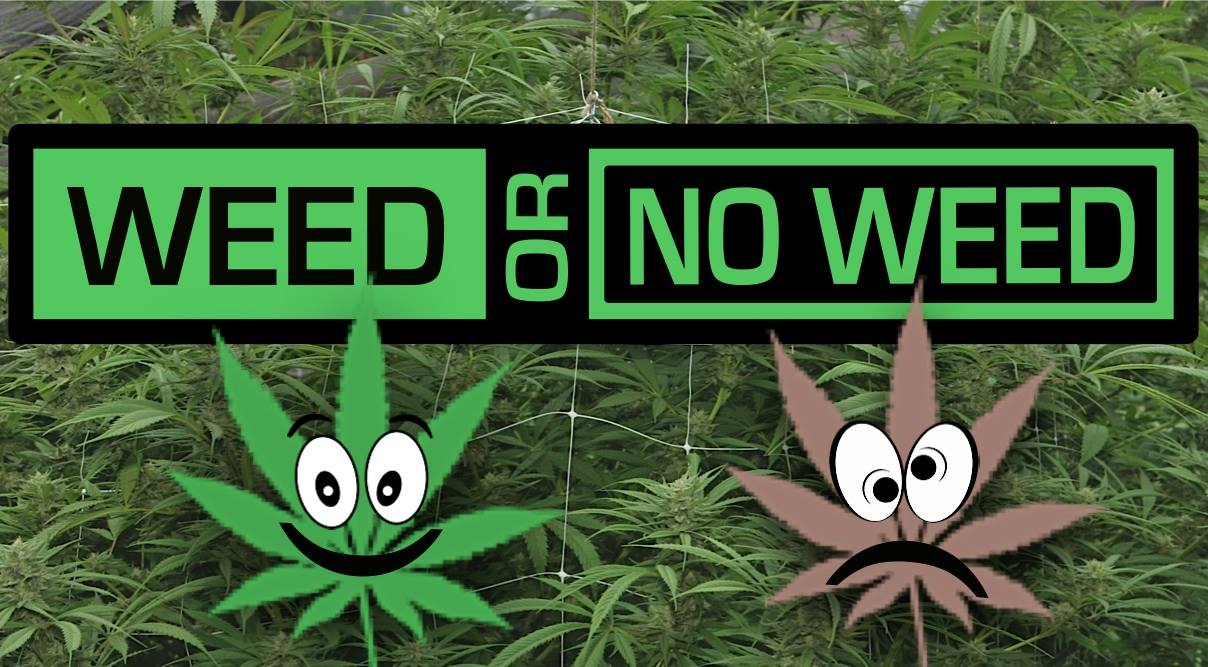 INTRODUCING WEED OR NO WEED: The Game Where We Find All