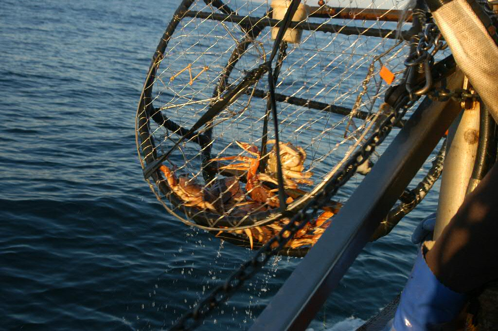 Recreational dungeness crab fishing now open to entire for Crab fishing game