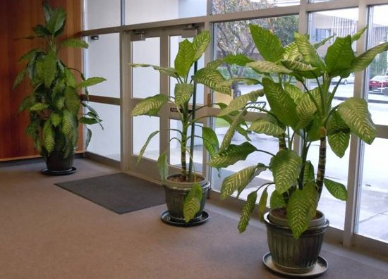 Help Redacted Is Evicting These Big Lobby Plants Lost