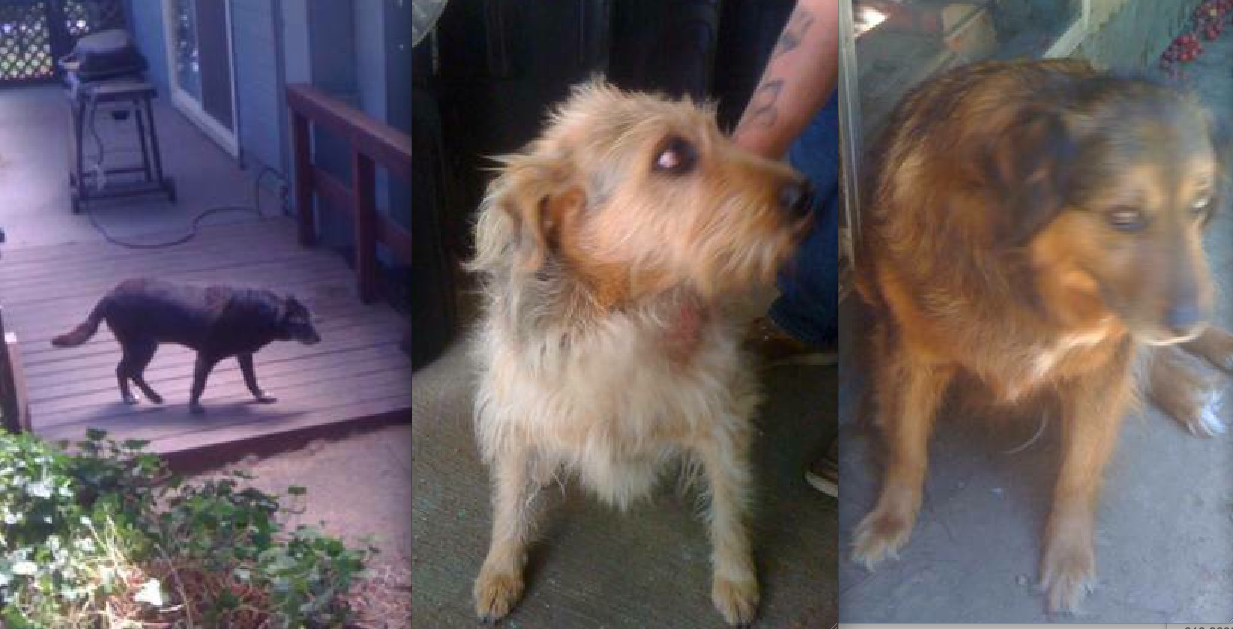 Craigslist Posting Leads To Rescue Of Abandoned Dogs Sheriff S Office Seeking Creep Who Ditched